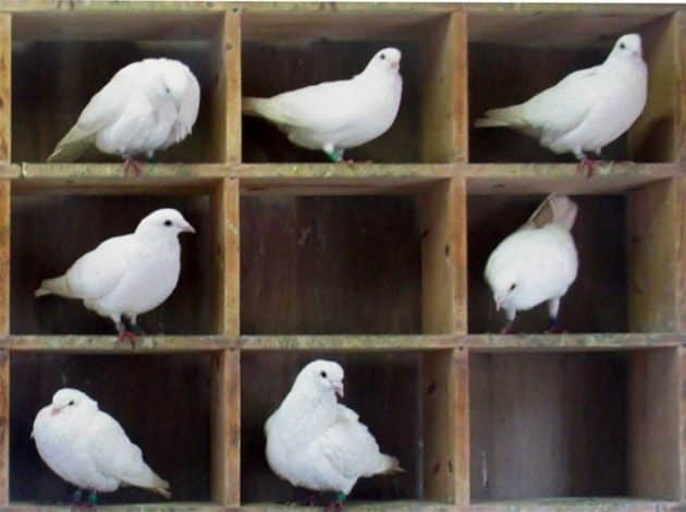 Photo of Güvercin Yuvası Prensibi