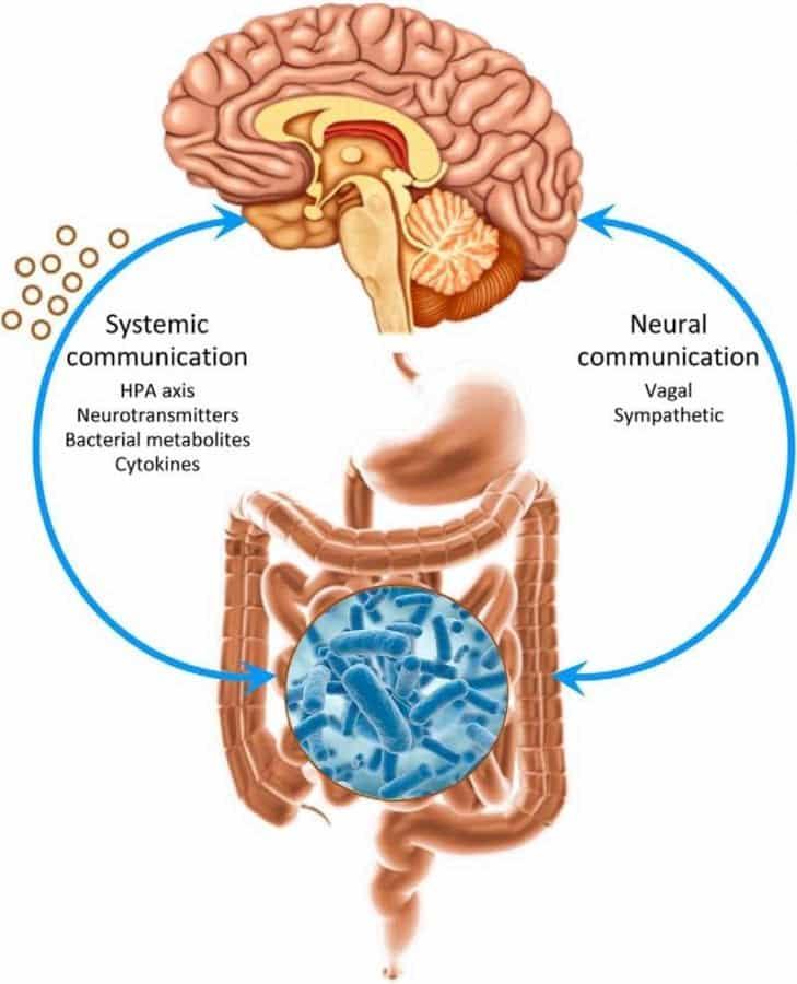 beyin-bağırsak-bağlantısı