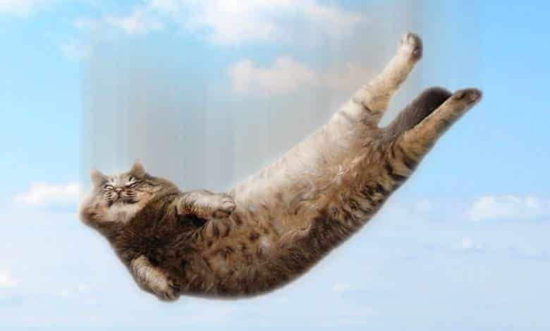 tereyağlı kedi